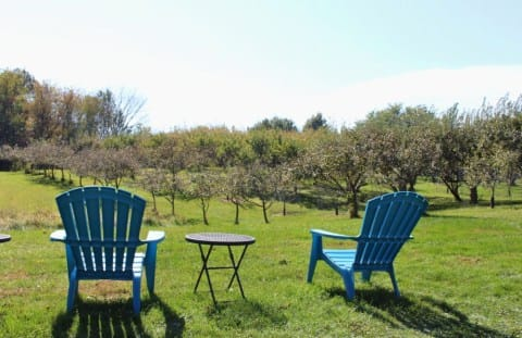 Autumn at Local Apple Orchards